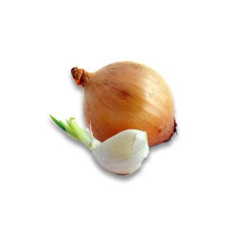 Cipolle e aglio da trapianto